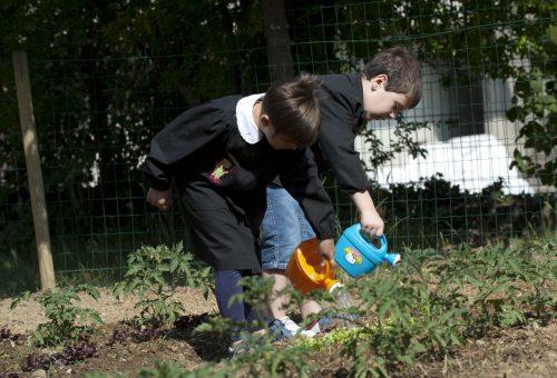 Quando la Chiocciola coltiva il domani: Trieste e la rete degli Orti in Condotta