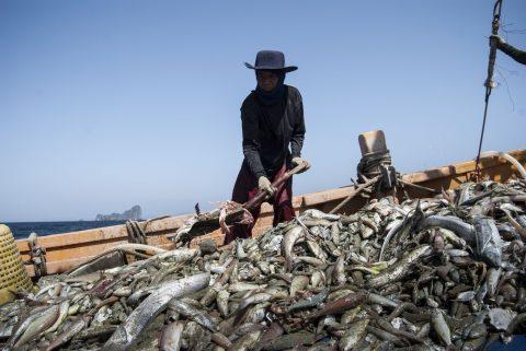 thailandia_pesca