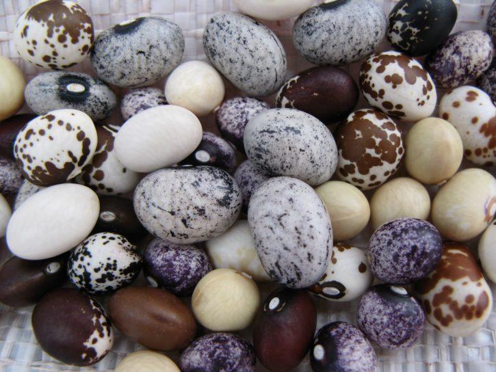 Popping_beans_(Phaseolus_vulgaris)