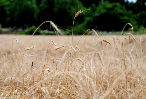 Come si è arrivati a spingere i nostri contadini a minacciare di non seminare più i loro campi?