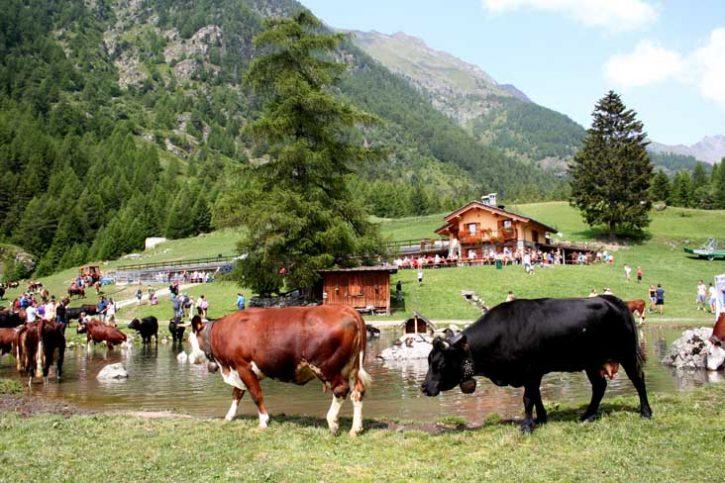 ALPAGE-CRESPIN-2013-Alpeggi-Aperti-Valle-d-Aosta01