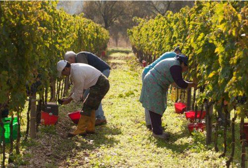 La lotta al caporalato è una priorità per la nostra agricoltura