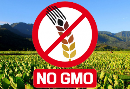 Slow Food sostiene il Tribunale Monsanto: firma la petizione!