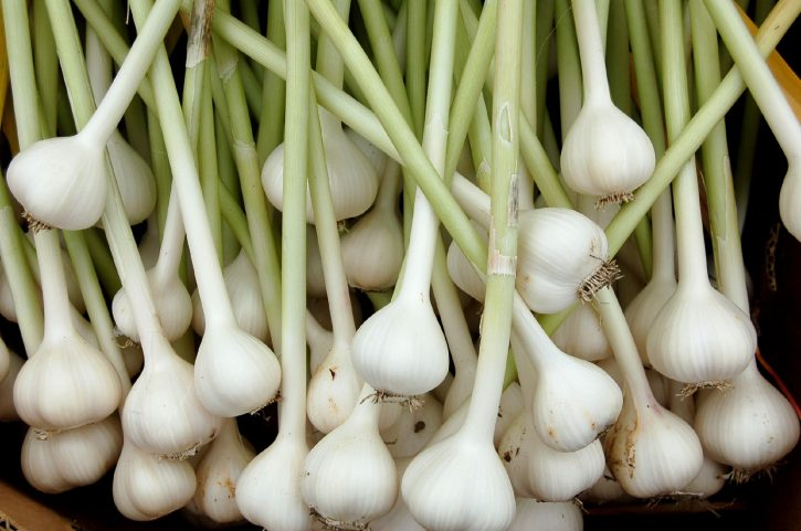 garlic_organically_grown