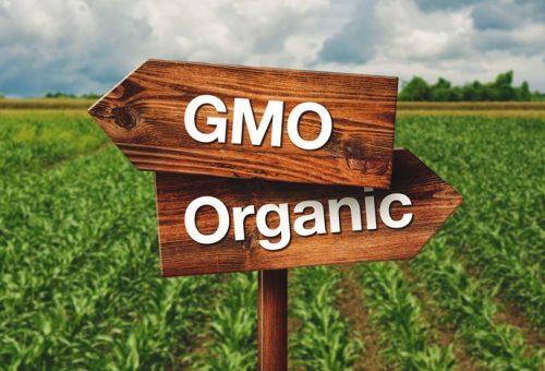 Waitrose elimina i mangimi Gm: « è il più grande colpo di questo secolo inflitto alle colture Gm»