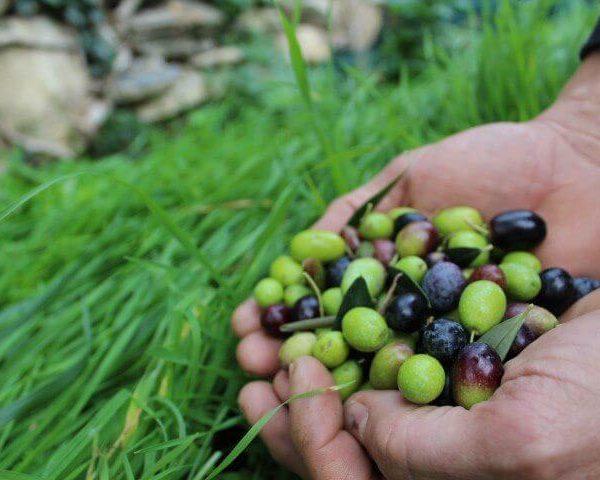 Dop, la tutela della qualità non divida gli agricoltori