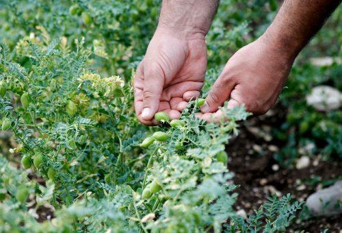 Europa: a rischio desertificazione l'8% del territorio. Salviamo il suolo