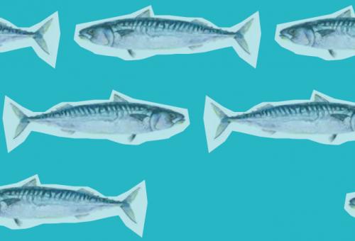 Un mare di salute: conoscere, scegliere e cucinare il pesce