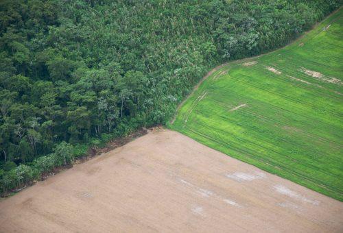 Soia e bistecche, la deforestazione è in tavola