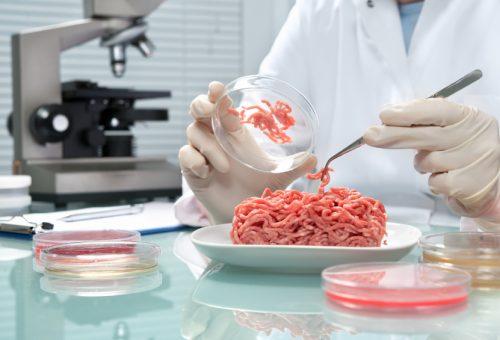 """Tra gli hamburger in vitro e la """"liberazione animale"""", un altro allevamento è possibile"""