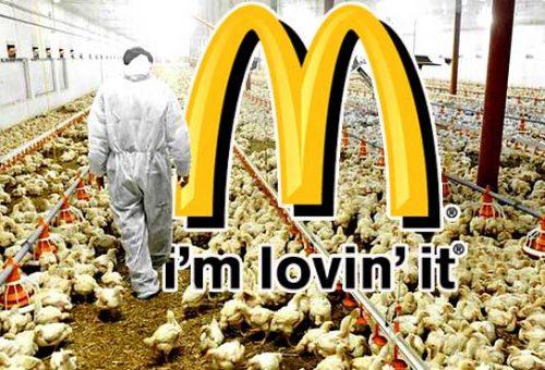 Meno antibiotici nei polli di McDonald's (ma solo dal 2019)