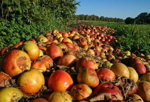 Con il cibo sprecato sfameremmo l'11% della popolazione mondiale