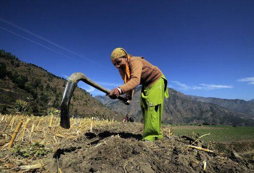 Clima, è il momento dell'agricoltura