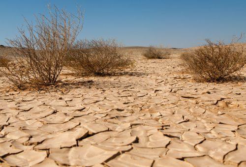 Cambiamento climatico, degrado del suolo e perdita di terreni agricoli. Le soluzioni secondo la Fao