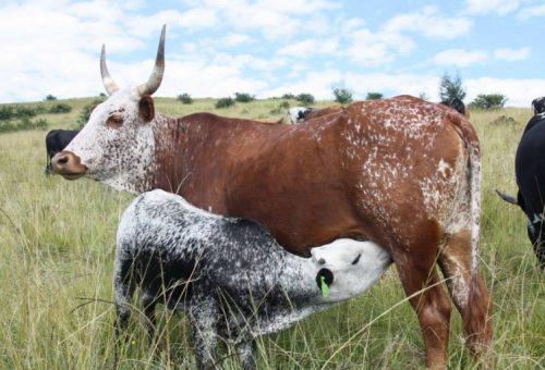 Sudafrica: la sfida del clima che cambia