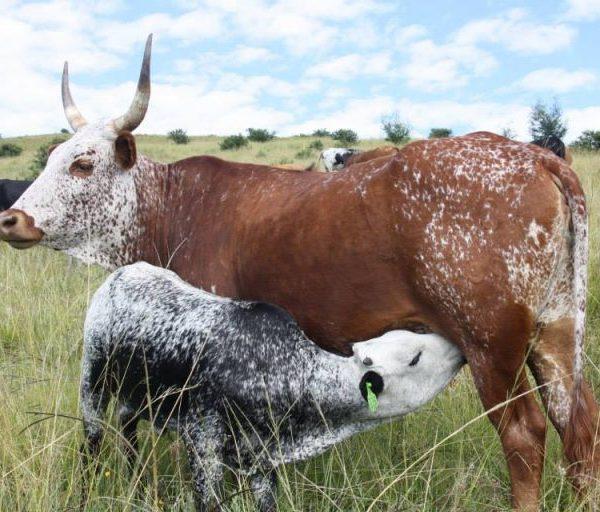 Il Sudafrica affronta la sfida del clima che cambia