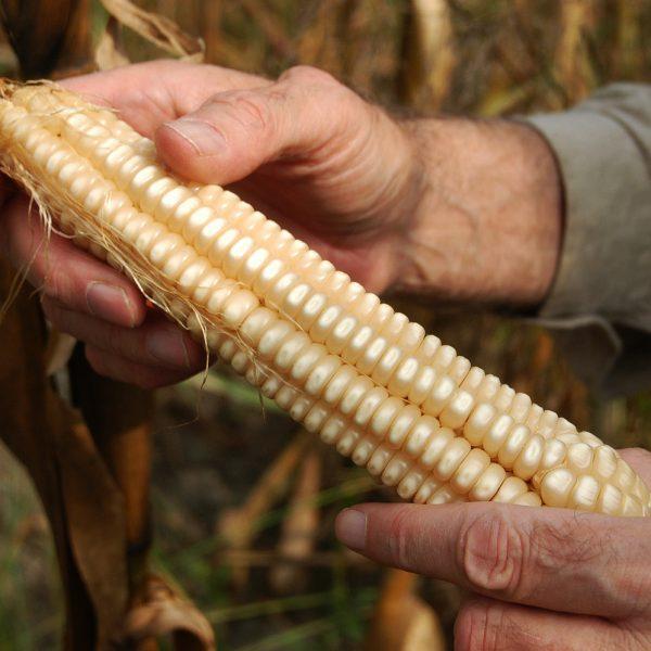 Salviamo i semi! L'impegno di Slow Food e dei genetisti