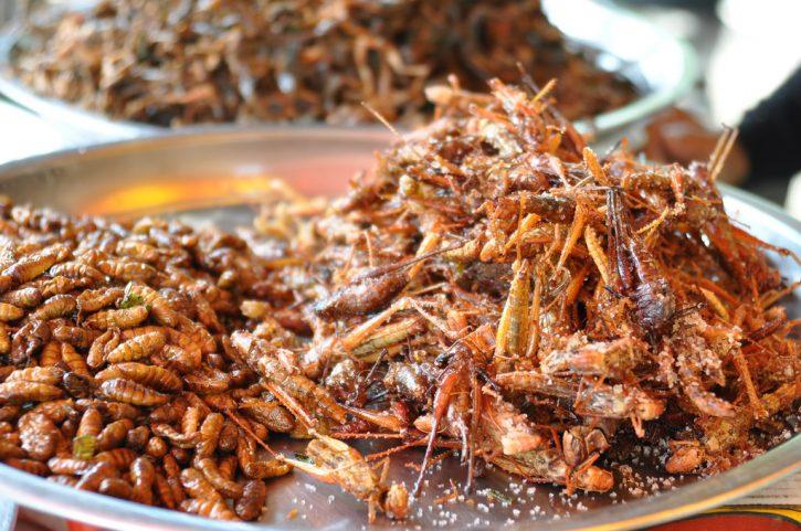 Altro che insetti commestibili, sono gli antibiotici a minacciare la salute
