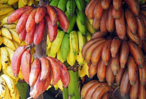 Il futuro dell'Uganda a rischio: fermiamo gli Ogm