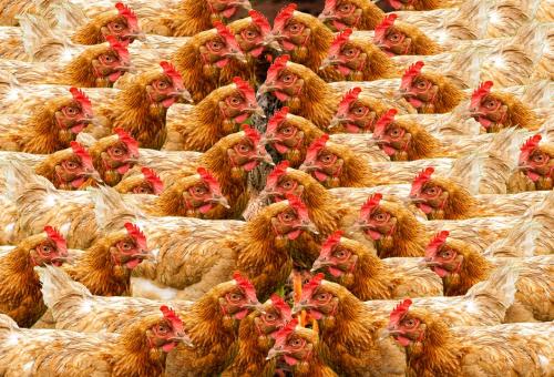 Troppi antibiotici, ma l'Ue abbassa la guardia. La denuncia del Guardian
