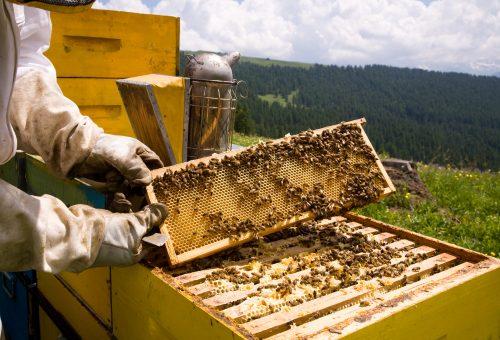 """L'insetticida """"amico delle api"""" non ferma la grande moria degli alveari"""