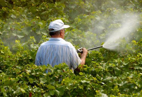 L'erbicida dicamba è un disastro, ma Monsanto paga chi lo utilizza