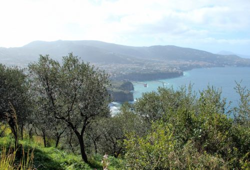 La Campania conferma: la fatica premia e le cultivar autoctone resistono meglio
