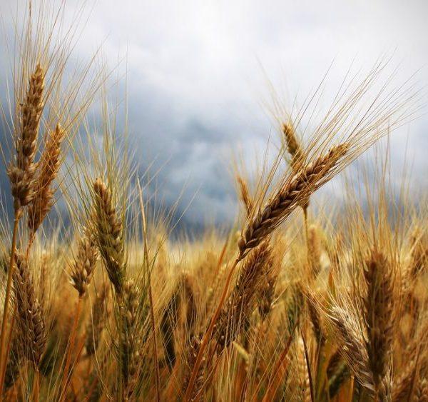 Cibo libero da pesticidi! Al via la Pesticide Action week!
