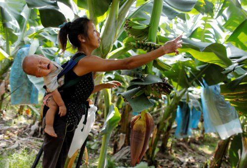 Laos, il 96% della popolazione è avvelenata dai pesticidi