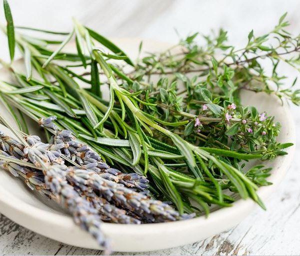 Le erbe spontanee: un patrimonio da scoprire e proteggere