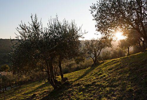 Lazio: l'olivicoltura cresce ancora, tra innovazione e identità agricola