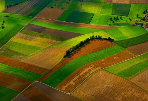 La terra e il cibo: parole chiave nel nostro futuro