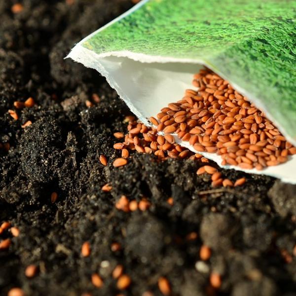 I semi garantiscono la sopravvivenza dell'umanità: lasciamoli liberi