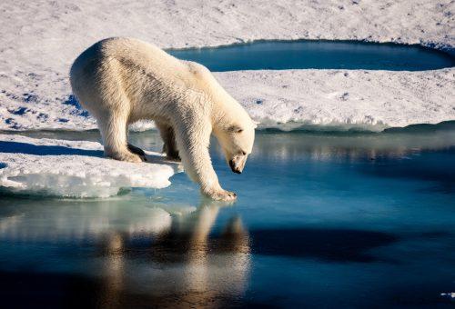 È l'essere umano l'animale più pericoloso per il pianeta