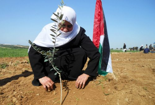 Appello di Slow Food in difesa dei diritti del popolo palestinese