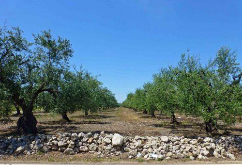 """A Montecatini Terme una """"tre giorni"""" dedicata a Slow Olive, il progetto olio di Slow Food"""