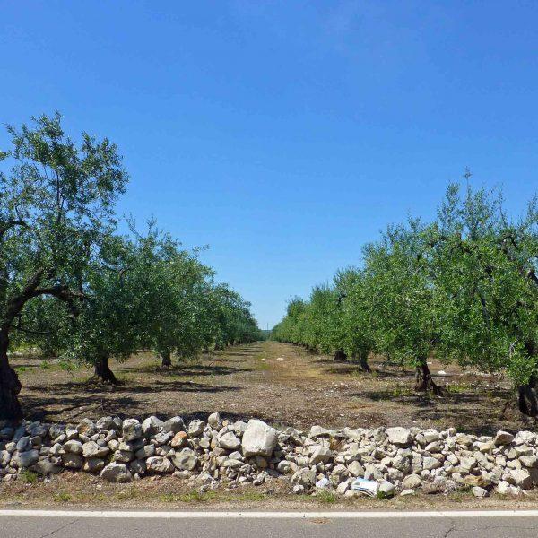 """A Montecatini Terme una """"tre giorni"""" dedicata al progetto olio di Slow Food"""