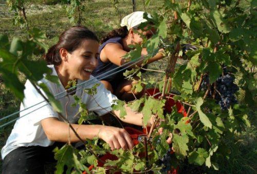 Resistenza contadina: un premio per giovani agricoltori