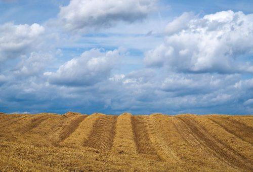 Non servono super cibi, ma una tecnologia al servizio dei contadini