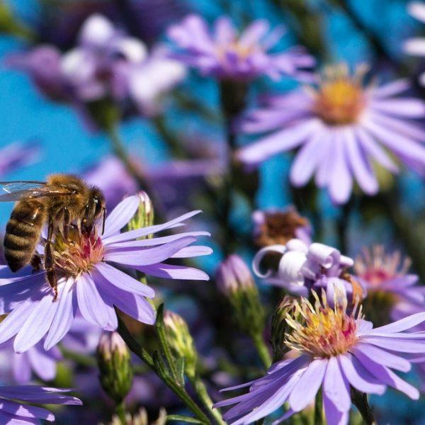 Anche una Chiocciola può salvare le api!