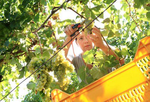 Slow Wine, quando il vino combatte il cambiamento climatico