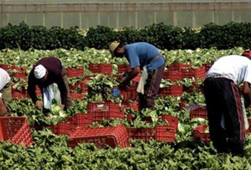 Slow Food Lazio aderisce allo sciopero dei braccianti