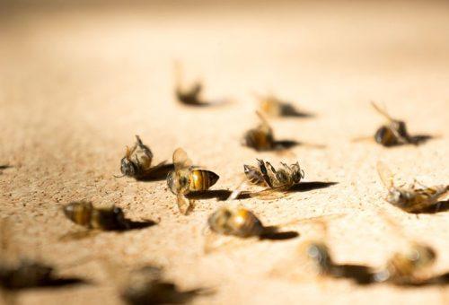 La strage delle api