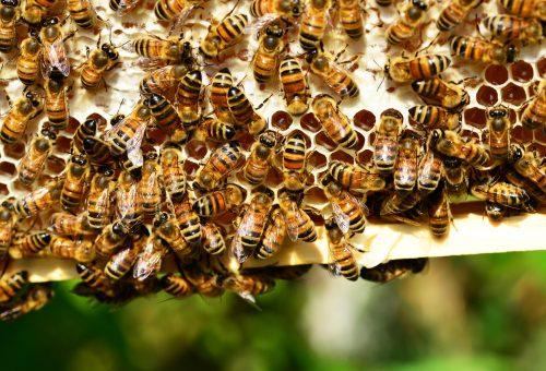 L'equazione impazzita del miele