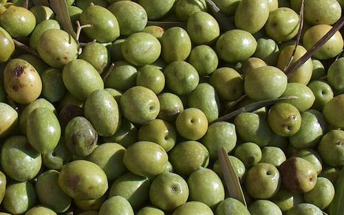 Olio extravergine italiano Presidio Slow Food