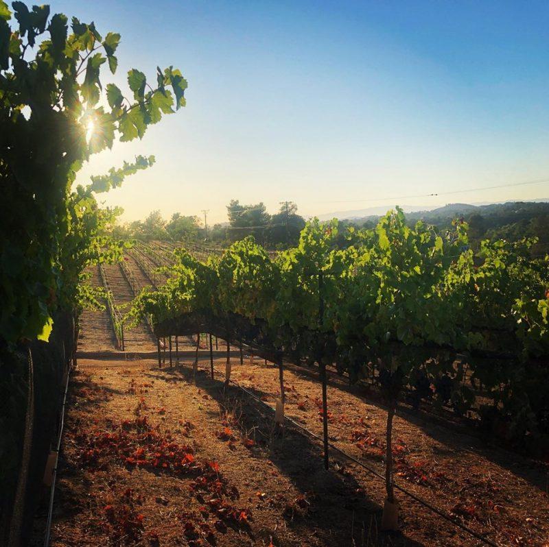 vesper vineyard