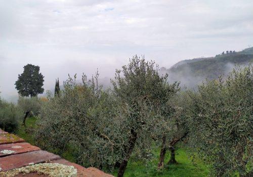 Viva l'olio di oliva (e chi lo produce)