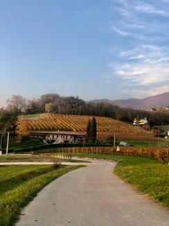 Slow Wine Scouting – Masot Le Fiabe del Vino (Veneto)