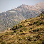 Leggere il paesaggio, ma soprattutto comunicarlo: la Valtellina
