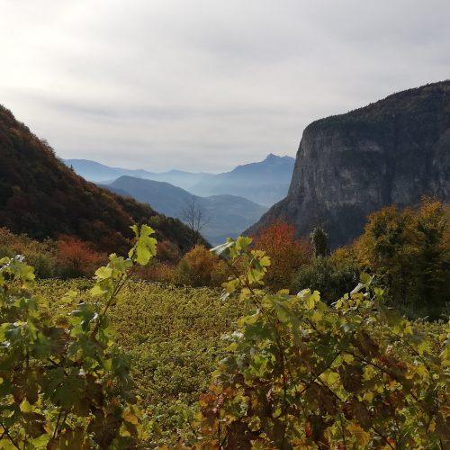 Un Müller-Thurgau a 1000 metri di altezza: Feldmarshall Von Fenner